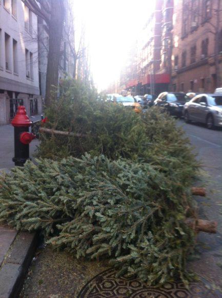 Christmas Trees 2012 death