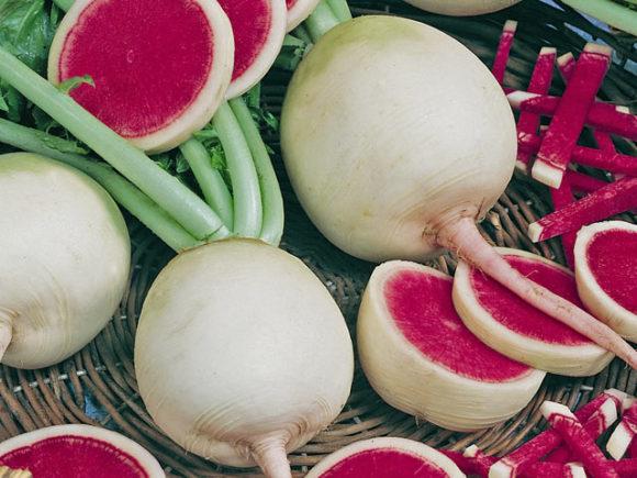 Beet radish