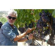 Vineyard Terlato Vineyard Sirch handling vines